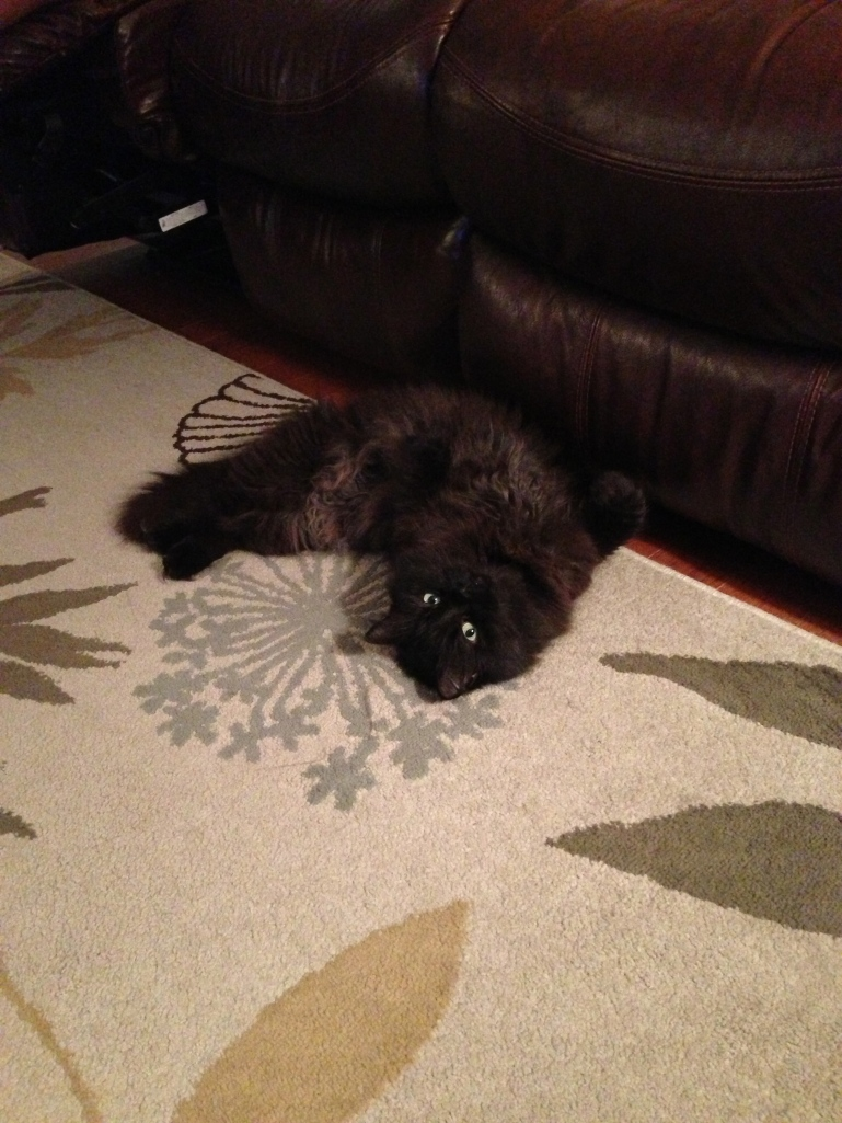 She particularly enjoys this ONE place on the rug.