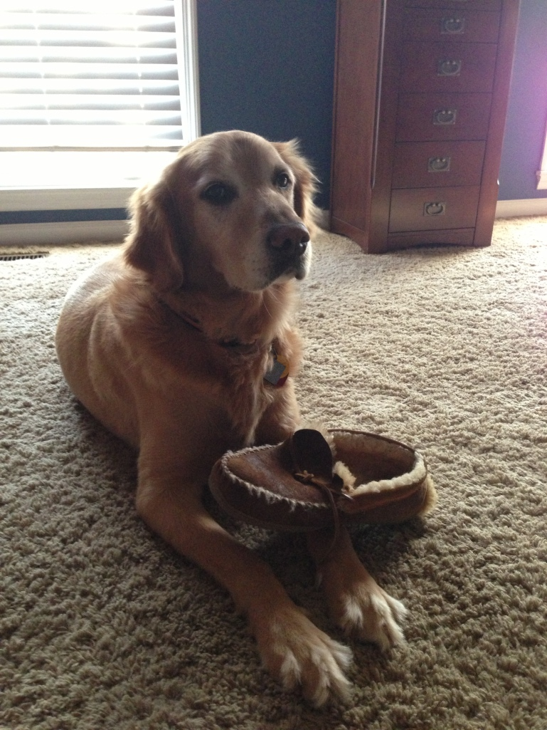 Sam with a Shoe. He loves retrieving our things.